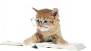 知的な仔猫
