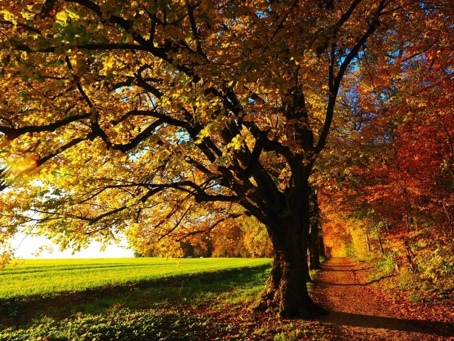 Perthは秋